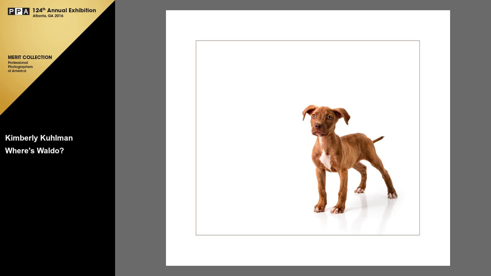 Where's Waldo IPC Merit 2015 Pitbull Puppy Rescue