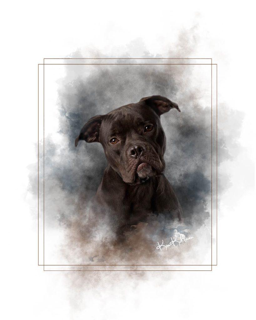 Pitbull rescue shelter Texas fine art